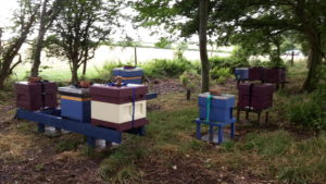 Castlethorpe Apiary under the trees