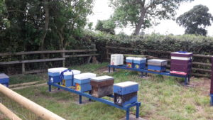 Stewkley Apiary set up with nucs