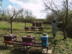 Great Brickhill Apiary in spring