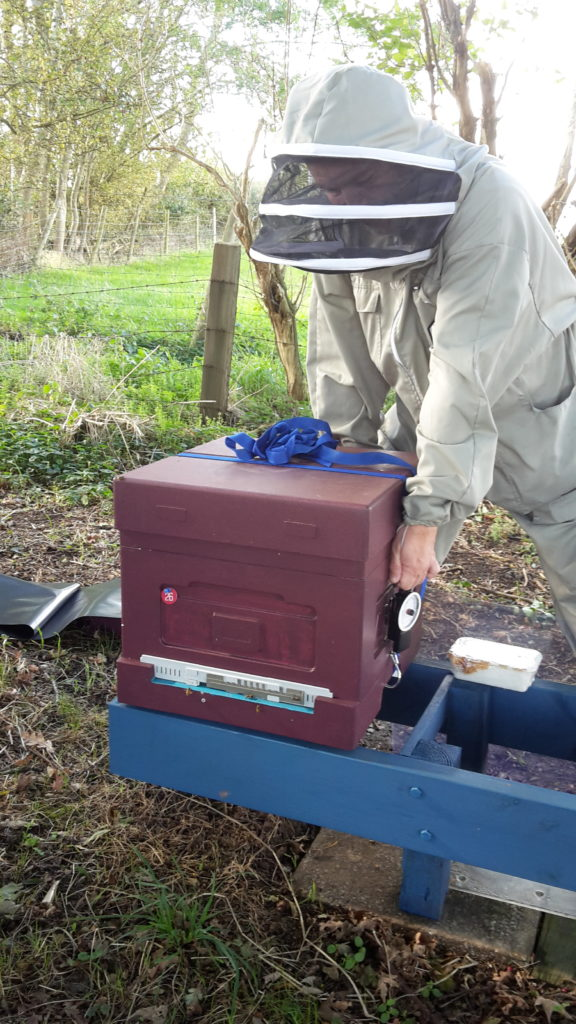 Hive weighing